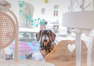 DOG beauty-lounge